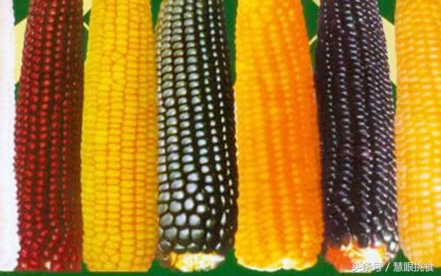 吃水果玉米有什麼好處?這麼多種玉米哪種營養好? - 每日頭條