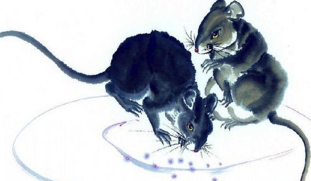 大師提示屬鼠人,6月份這幾個地方儘量別去!注意了! - 每日頭條