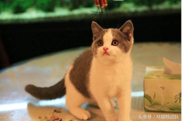 愛貓必修課:幼貓飼養(一) - 每日頭條