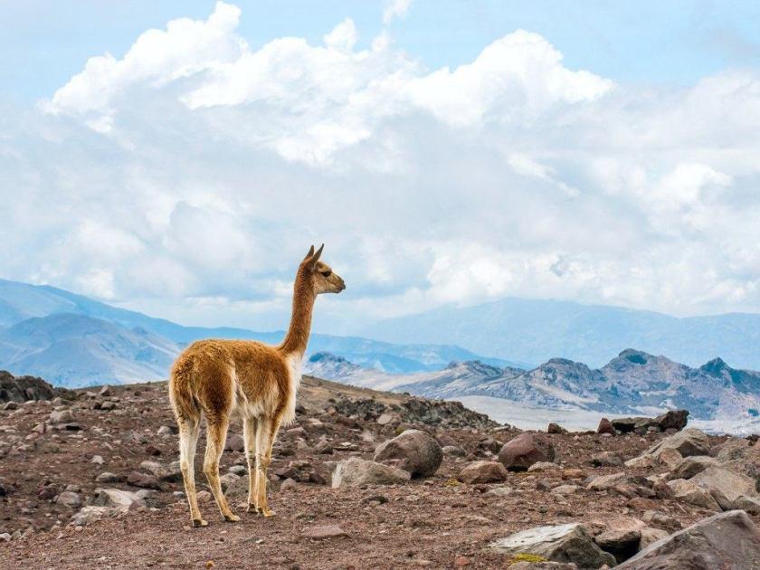 البيرو - أفضل دول العالم للسياحة الطبيعية