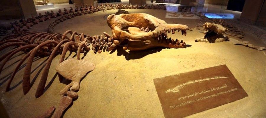 متحف وادي الحيتان بالفيوم في مصر