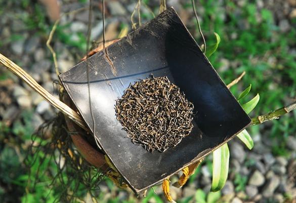 Lapsang Jin Jun Mei Golden Eyebrows Schwarzer Tee in meinem Garten 2