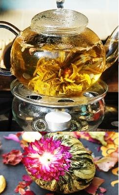 Wilde Teeblume aus altem Teebäume-Wald nahe Mae Taeng, Nordthailand