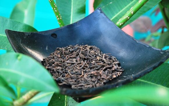 Gereifter (fermentierter) Lincang Pu Erh Tee in meinem Garten