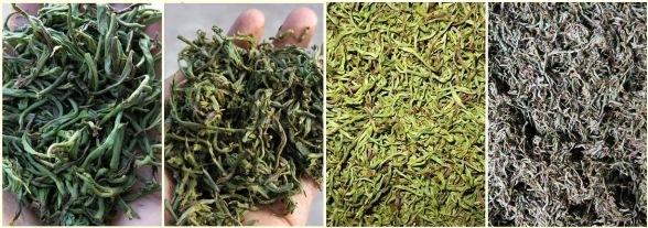 Verarbeitungsschritte von Fengqing Yunnan Schwarzer Tee