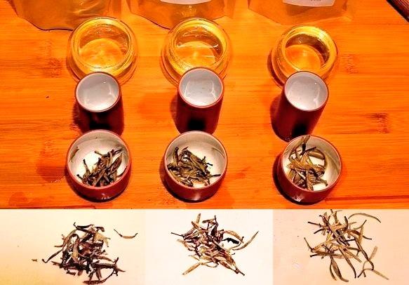 3 verschiedene Silver Needle weiße Tees in der Verkostung
