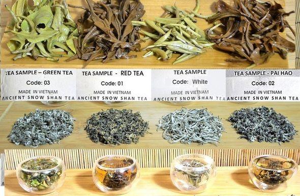 4 Ancient Snow Shan Tees: grün, schwarz, Pai Hao, Silver Needle