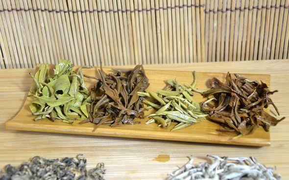 Vier Snow Shan Tees aus Vietnam, nasse Blätter: Sorgfältige Verarbeitung mit viel Liebe zum Detail