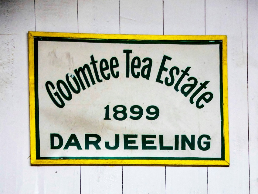 Goomtee Tea Estate, Darjeeling, Indien