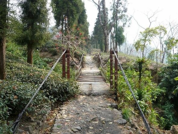Abenteuerliche Hängebrücke am Eingang des Jungpana Teegarten