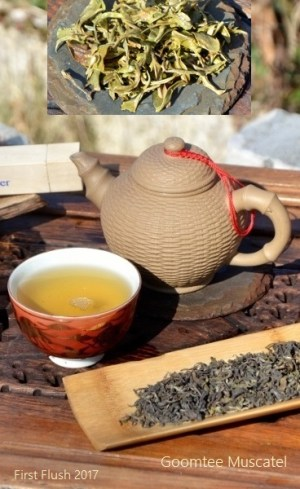 Tee der ersten Frühlingsernte 2017 des Goomtee Teegarten in Darjeeling