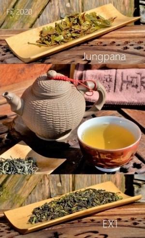 Jungpana First Flush 2020 Spring Wonder EX1 - Erste Frühlingspflückung 2020 des Jungpana-Teegarten in Darjeeling