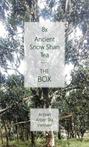 8 x Ancient Snow Shan Sample Box