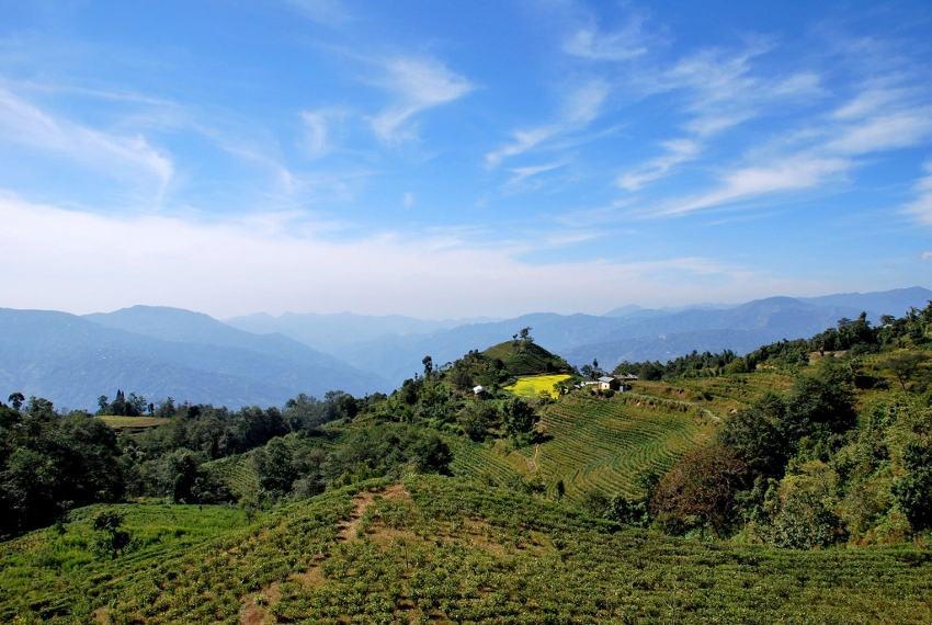 Jun Chiyabari Tea Garden, Nepal