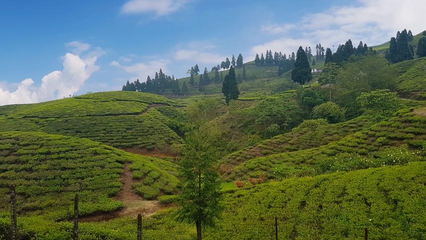 Nepal Tea Garden