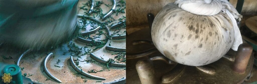 machinal rolling of tea leaves - individually and in bale