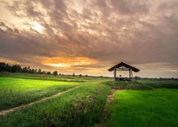 Les exportations de riz se portent bien cette année en Thaïlande