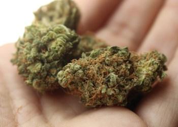 Le Mexique envisage de légaliser le cannabis