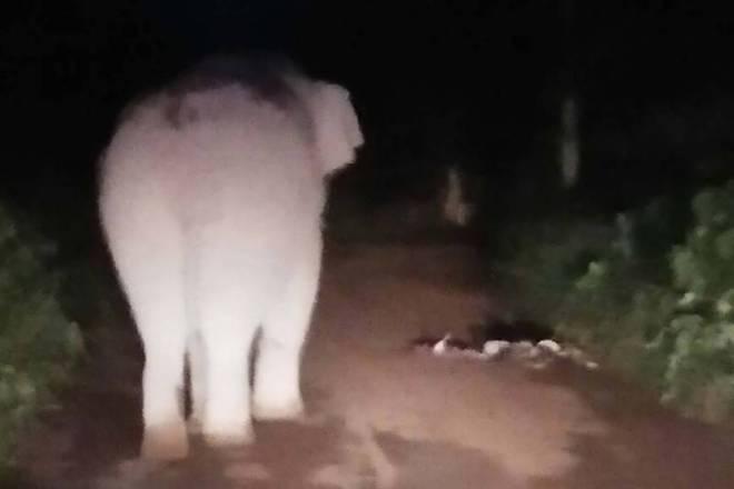 Le conducteur d'un pick-up est décédé lors d'une collision avec un éléphant sauvage, dans le parc national de Khao Yai