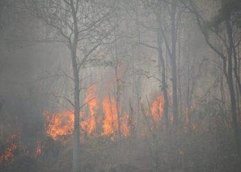 La nature, victime oubliée des incendies de forêt dans le nord de la Thaïlande