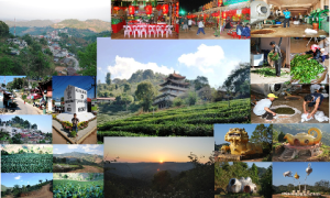 Doi Mae Salong, Center of Tea Cultivation in Northern Thailand, collage
