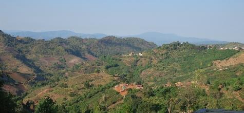 Doi Mae Salong tea slopes