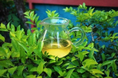 Wild Spring Long Jing Tea in my garden
