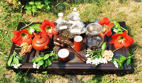 Setup for trying 2014 first harvest spring teas from Doi Mae Salong