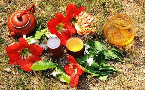 Set up for trying fresh Doi Mae Salong spring teas 2014