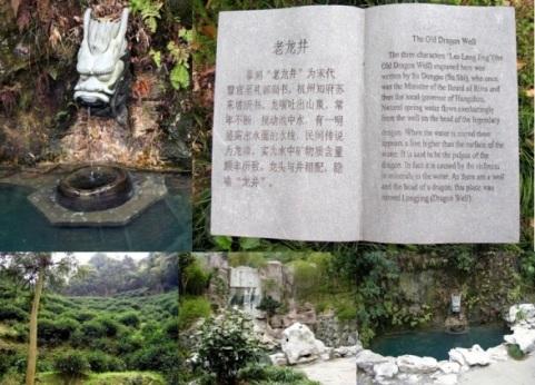"Original ""Dragonwell"" location near Hangzhou in China"