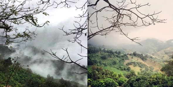 Doi Mae Salong - tea gardens in the clouds