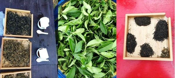 Everything's about tea: fresh tea leaves / dry teas