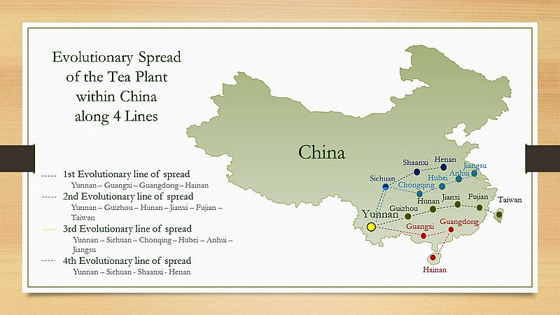Map - evolutionary spread of the tea plant from Yunnan within China