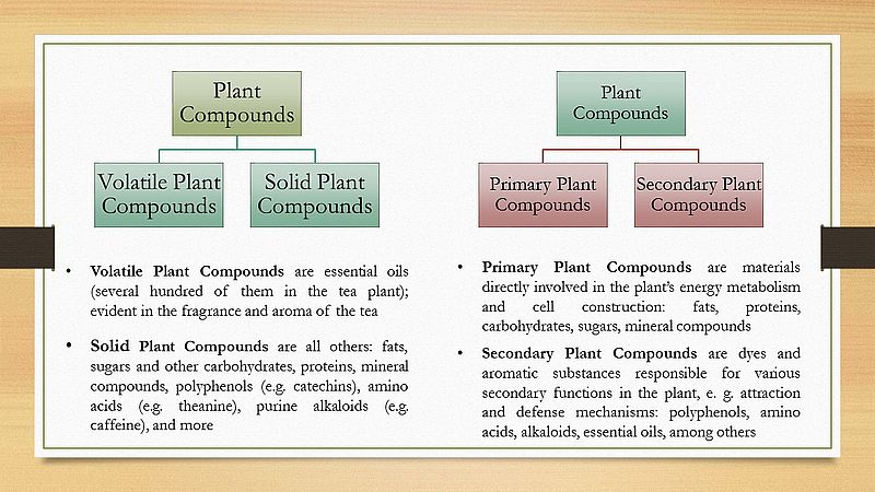 Ingredients of tea - types of Plant Compounds
