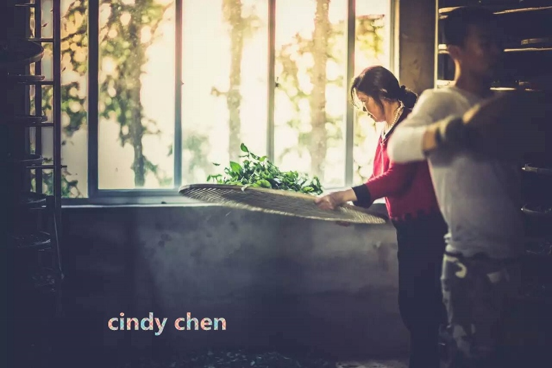 Cindy Chen - withering tea leaves