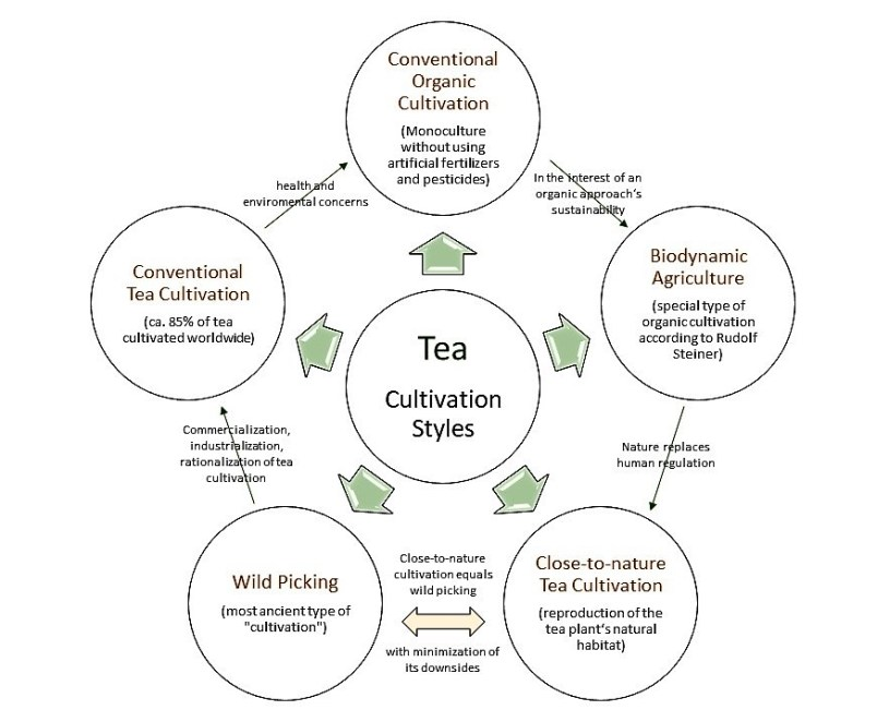 Classifications of tea cultivation styles and interrelations between them.