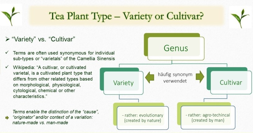 "Types of tea plants / sub-species of Camellia Sinensis : ""Variety"" vs. ""Cultivar"" - distincting the terms"