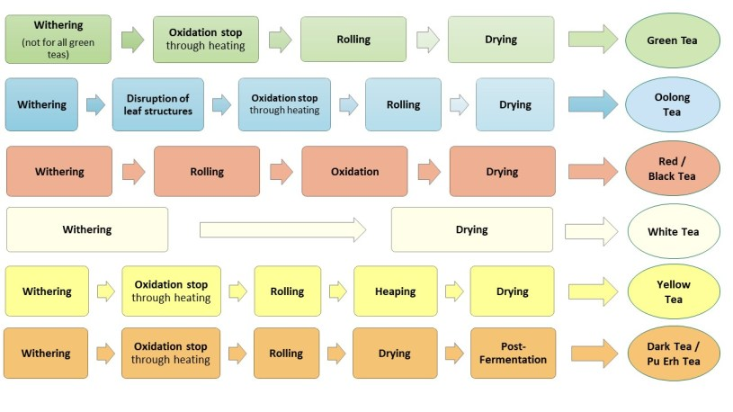 Steps of tea processing for all 6 categories - Chart