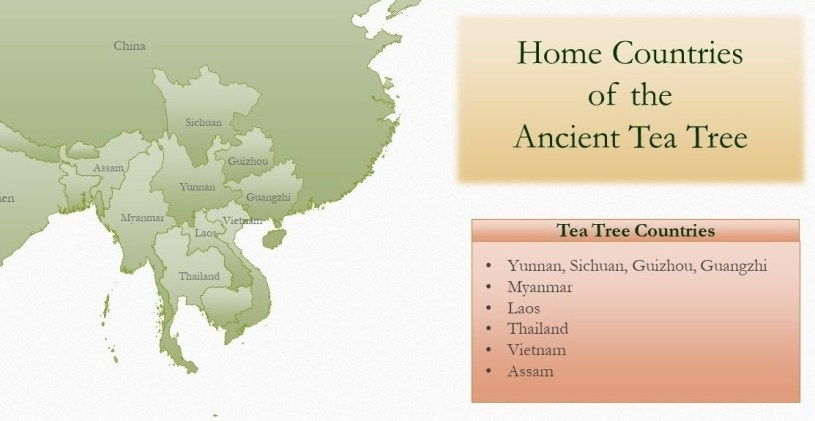 Home Countries of the Ancient Tea Tree - Map
