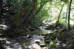 Entretien riviere arbre penché