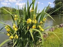 Entretien riviere iris