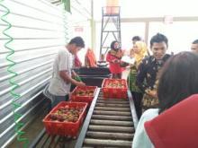 Pemerintah Rekom 10 Eksportir Manggis ke China, 1 Dari Sumatera