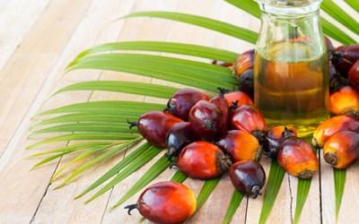 Palm Yağı Nedir?