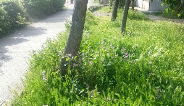 raste trava zelena aa