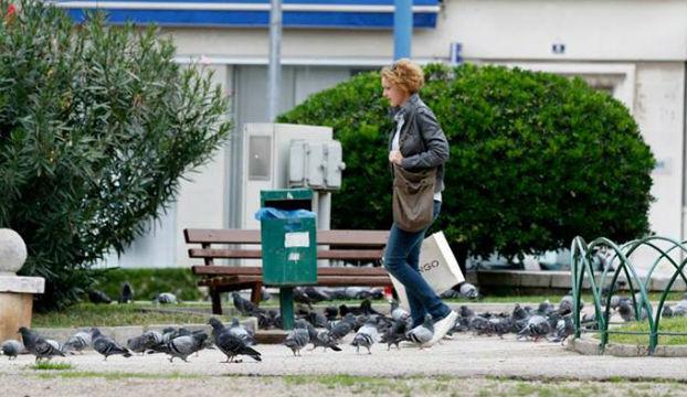 stenja golubovi