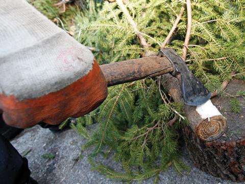 bozicna drvca1-josipa181214