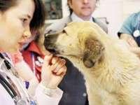 STEM ile Kuyu Köpek'i Kurtarmak