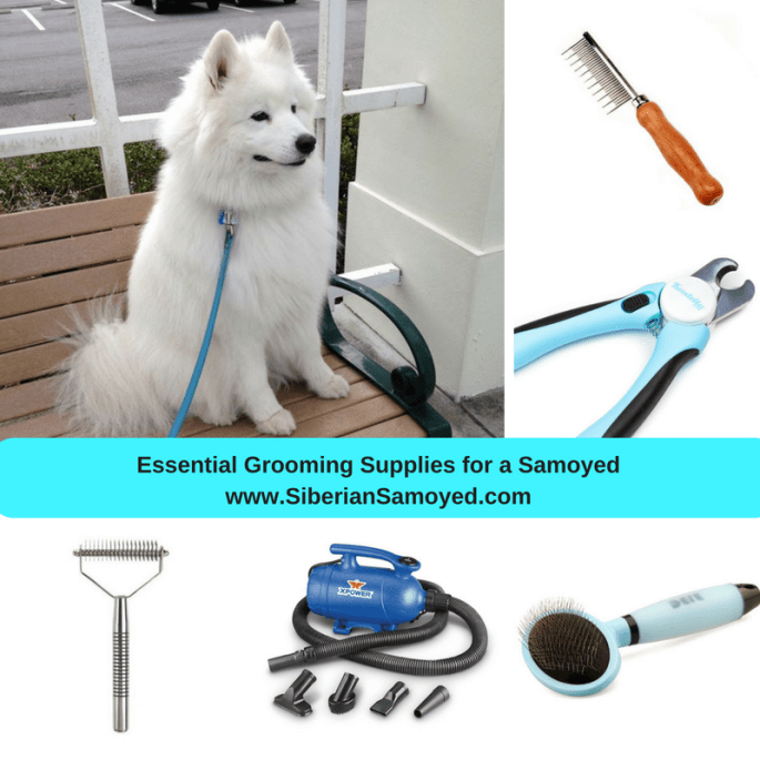 essential-grooming-supplies-for-a-samoyedwww-siberiansamoyed-com