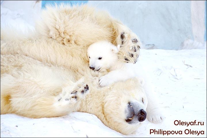 Gerda and her cub
