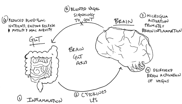 Brain gut axis
